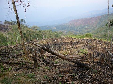 Déforestation entre Calderas et Masparrito