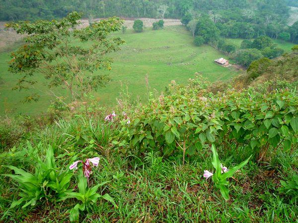 Finca près de Mucuchachí (Venezuela)