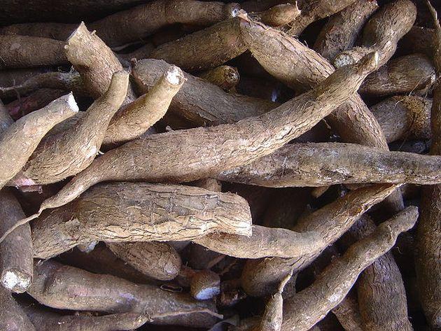 Yuca (Manihot esculenta)