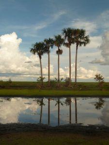 Llanos de Apure
