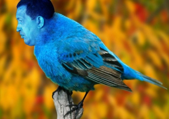 Chávez - petit oiseau